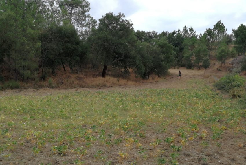 Boa Vista land for sale3